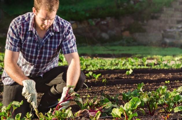 Offre d'emploi : chargé(e) de projet en horticulture et alimentation locale